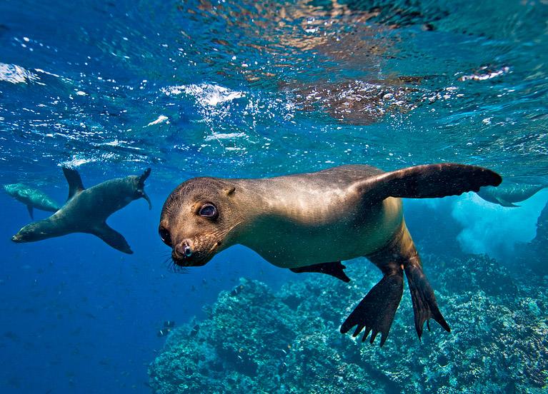 galapagos mergulho