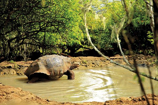 tartaruga-gigante-galapagos